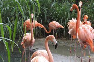 zoologico-de-barranquilla-704577